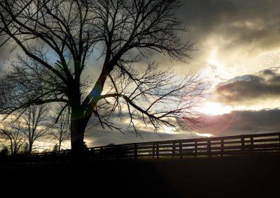 photography-tree-881